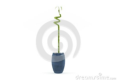 Small fresh decorative green tree isolated