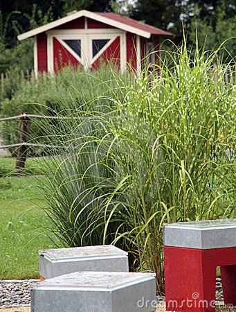 Small garden with perennial grass