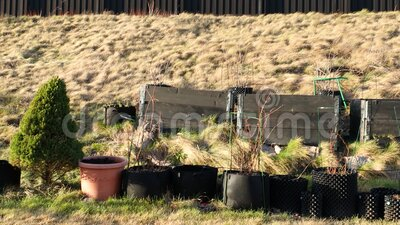 Small garden in plastic pots and pallet collars. Beautiful spring nature backgrounds. Gardening concept stock video footage