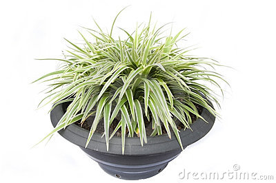 Small grass as white background