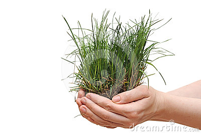 Small grass on woman hand.
