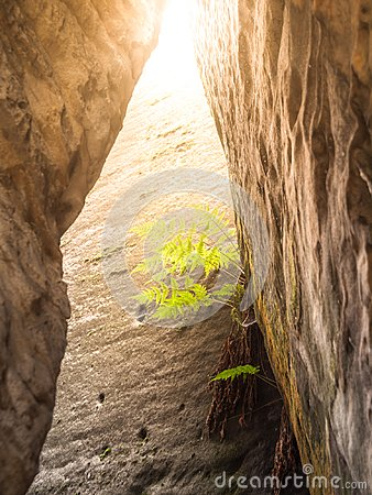 Free Small Green Bracken In Sandstone Wall. Natural Detail Stock Image - 100079771