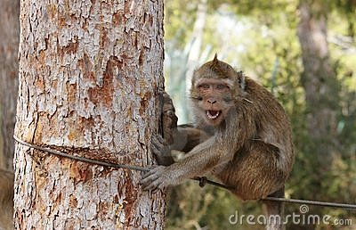 Small grinning monkey on the rope