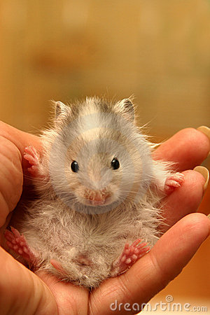 Small hamster - 7