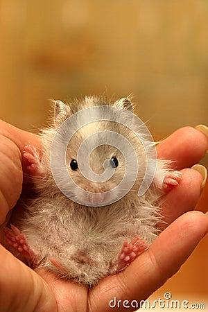 Small hamster - 7