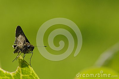 Small Insect 1
