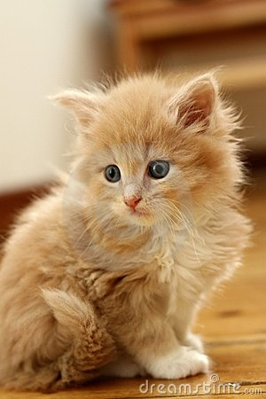 Free Small Kitten Stock Image - 9157051