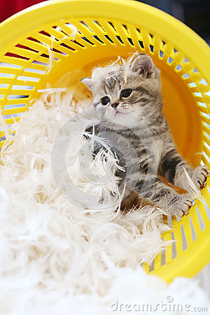 Free Small Kitten Among White Feathers Stock Image - 63931351