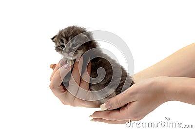 Small kitten on a hand