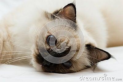Small kitten resting