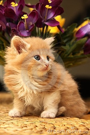 Free Small Kitten With Violet Flowers Royalty Free Stock Images - 9158009