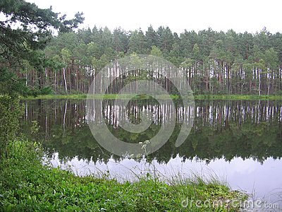 Small lake in wood