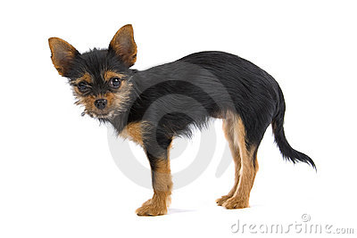 Small mongrel dog