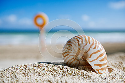 Small nautilus shell  on beach against blue sea