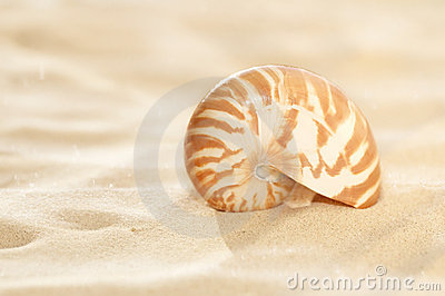 Small nautilus shell on beach sand