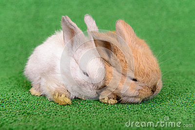 Small newborn rabbits