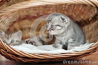 Small nice kittens