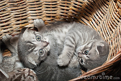 Small nice kittens