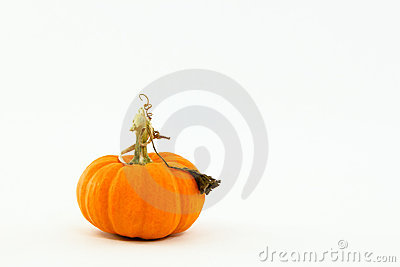 Small orange pumpkin with whimsical, curly stem