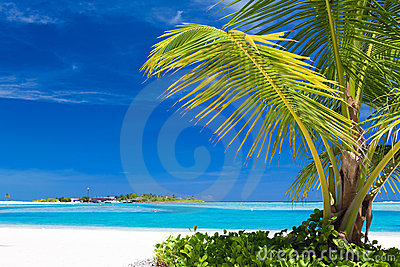 Small palm tree hanging over blue lagoon