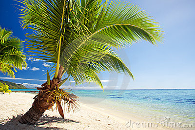 Small palm tree hanging over stunning lagoon