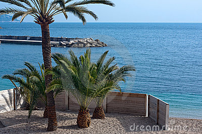 Small palm trees on tropical beach