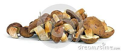 Small pile of yellow boletus mushrooms near.