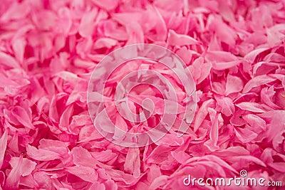 Small pink flower petals