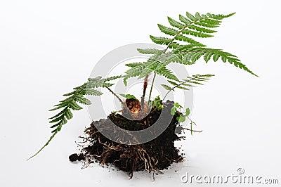 Small plant.