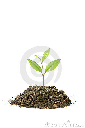 Free Small Plant Royalty Free Stock Photos - 4643088