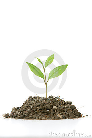 Free Small Plant Royalty Free Stock Photography - 4643107
