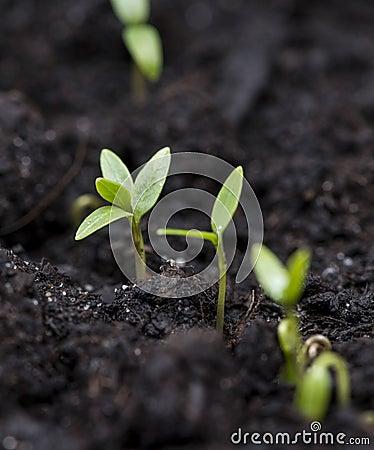 Small plant in dark earth
