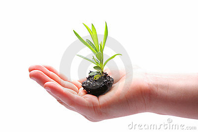 Small plant in hand