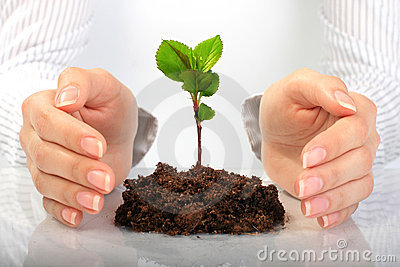 Small plant in hands.