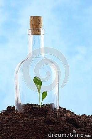 Small plant in soil inside glass bottle