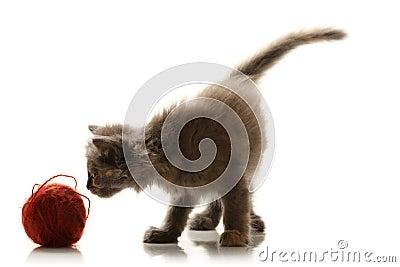 Small playful kitty