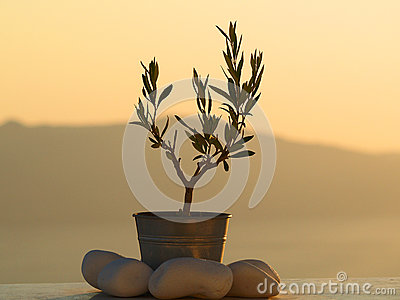 Small potted plant with rocks