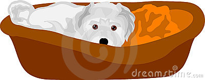 Small puppy lying in cot