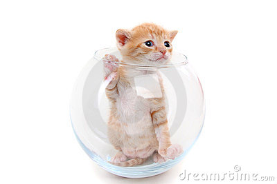 Small purebred kitten in a glass vase
