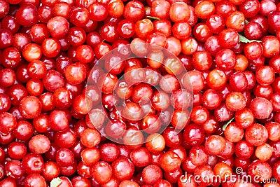 Small red cherries