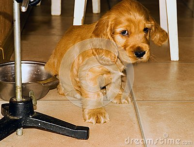 The small sad puppy.