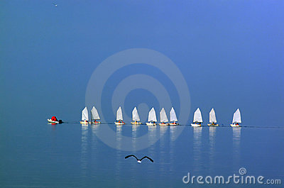 Small school of sailing