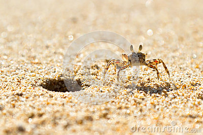 Small sea crab on the beach