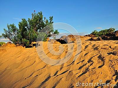 Small shrub plants in desert