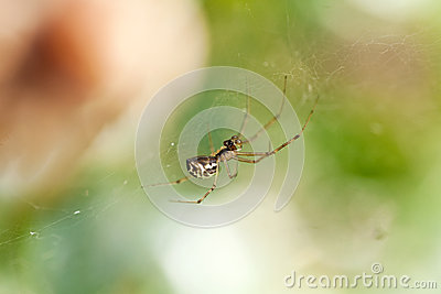 Small spider on a cobweb spiderweb in summer
