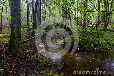 Small stream flowing in forest