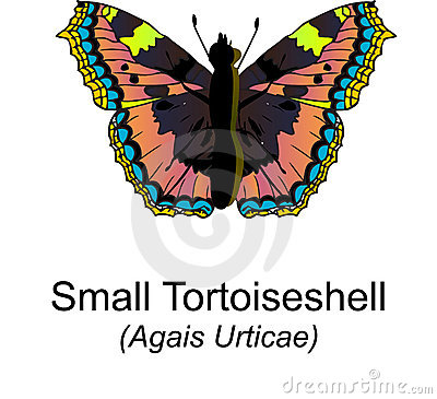 Free Small Tortoiseshell Butterfy Royalty Free Stock Images - 8243679