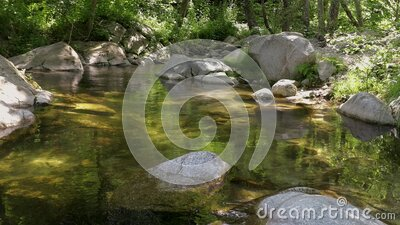 Small transparent in a sunny day river in the forest stock footage