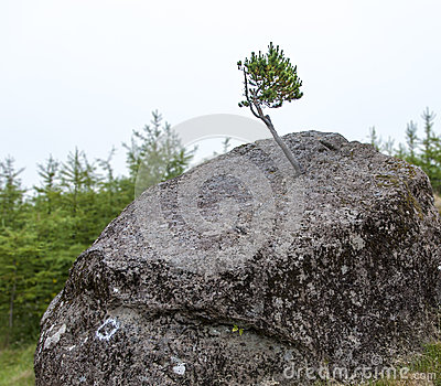 Small tree and big rock