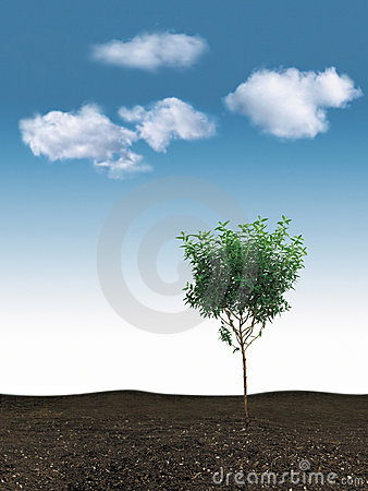 Small tree & blue sky